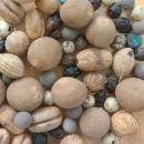 Palm Tree Seeds Mix